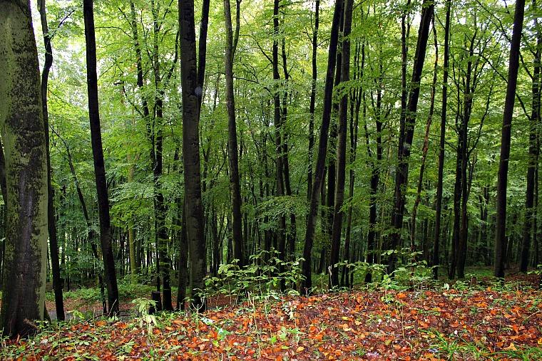 germany-kassel-forest