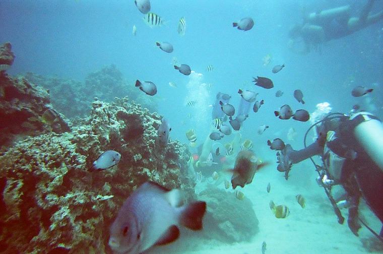 philippines-diving