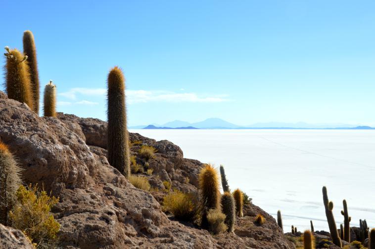 Fish Island. uyuni bolivia