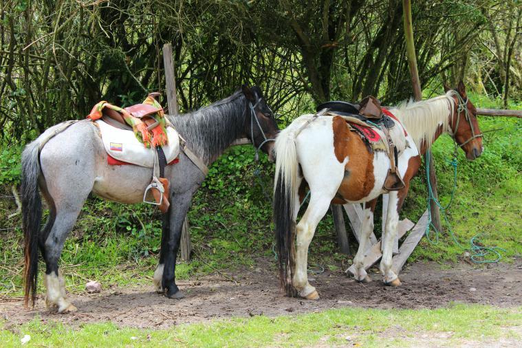 ecuador-el-crater-horses
