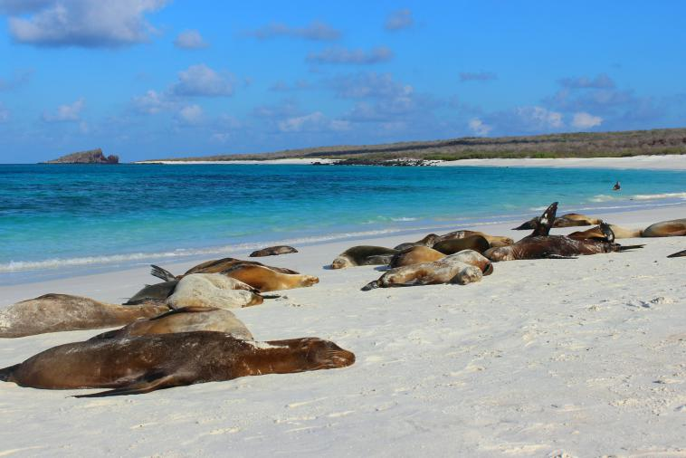 Sea lions galapagos espanola