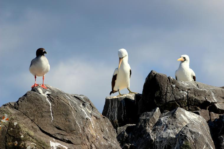 galapagos-espanola-birds-chatting - Copy