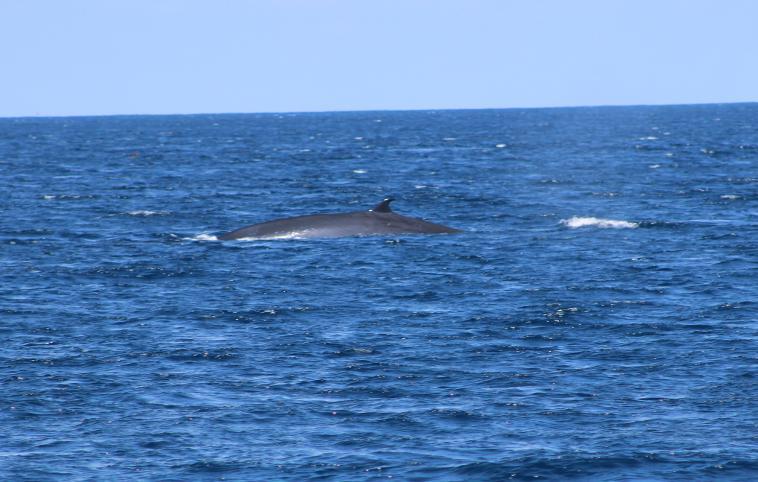 galapagos-espanola-whale