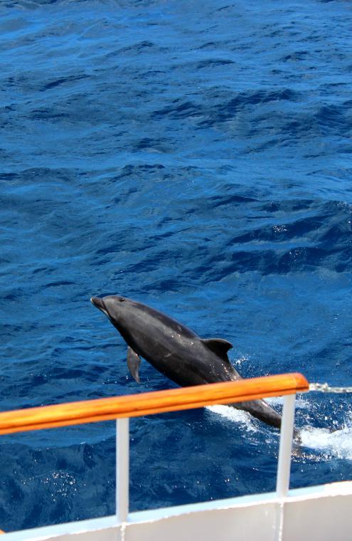 galapagos-floreana-dolphin