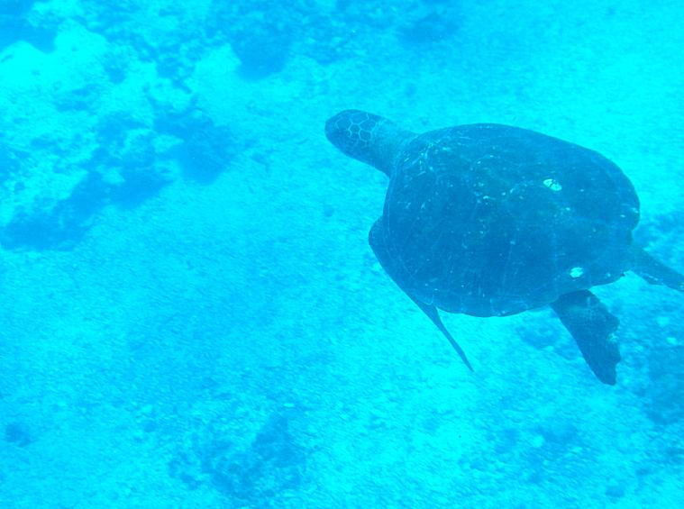 galapagos-floreana-turtle2