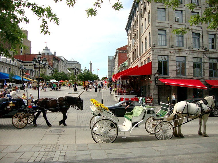 canada-montreal-horse