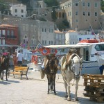 Donkeys near the harbor in Hydra, Greece.