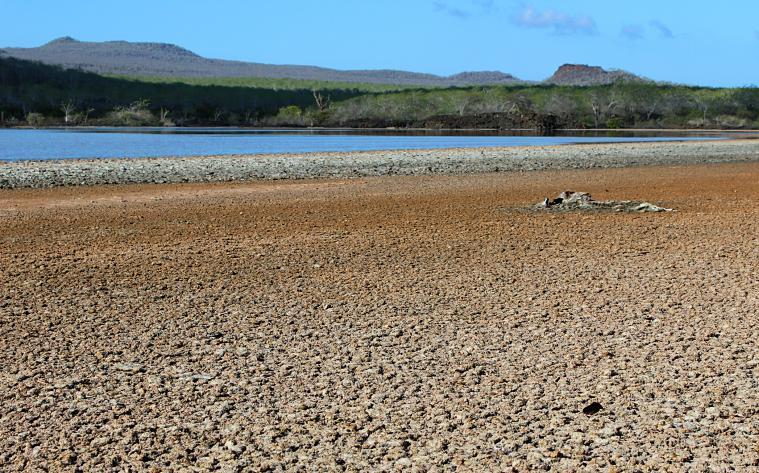 galapagos-floreana-beach4 galapagos islands floreana