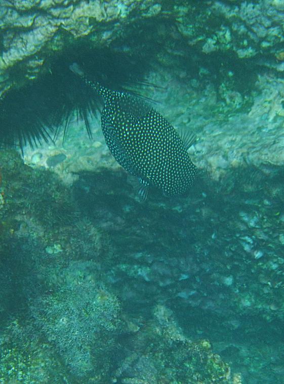 galapagos-sombrerochino-fish9