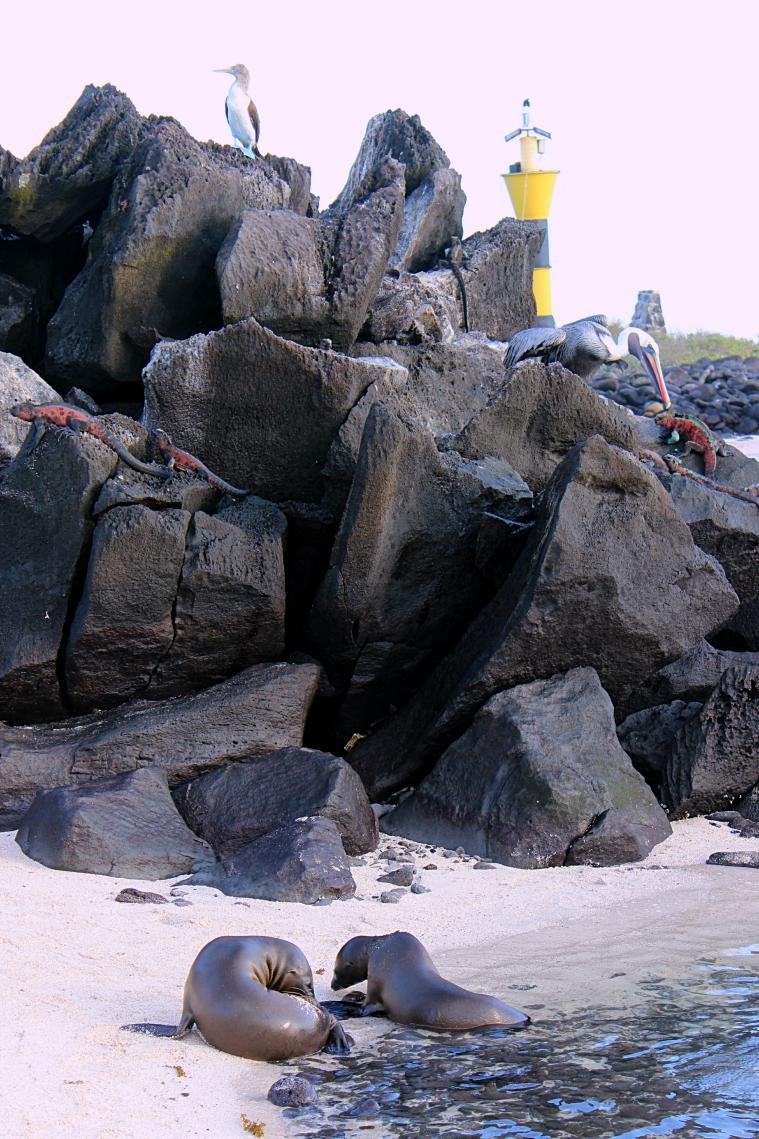 galapagos island espanola animals
