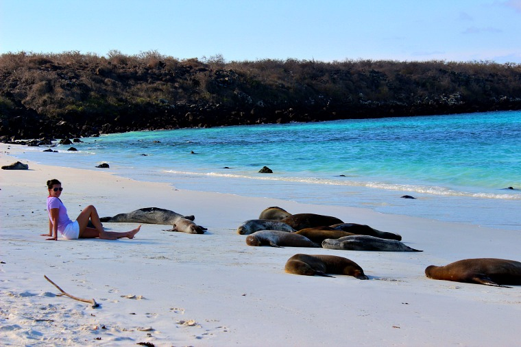 galapagos islands espanola sea lions