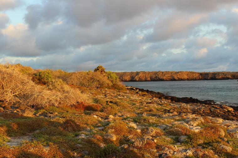 galapagos-plaza-landscape