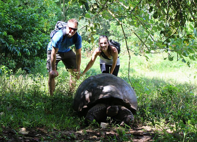 galapagos-santa-cruz- tortoises