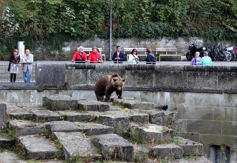 switzerland-bern-bear