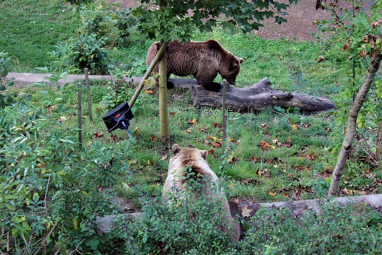 switzerland-bern-bears