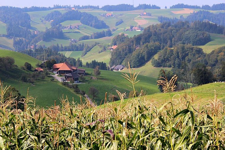 switzerland-emmental-farms