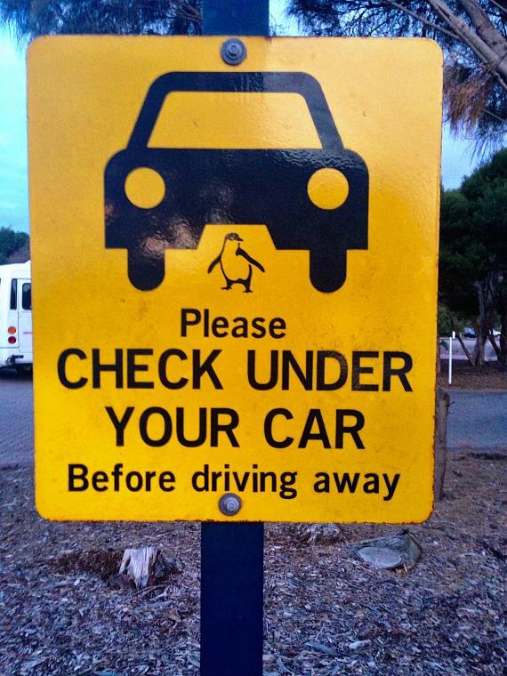 australia-phillip-island-penguin-sign