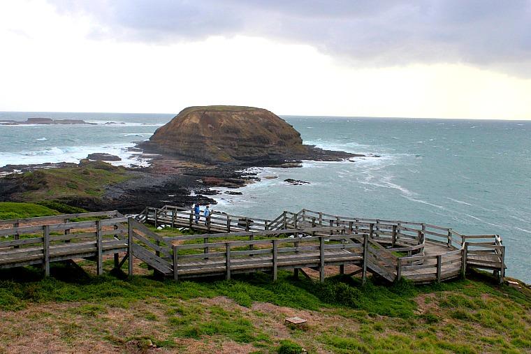 australia-phillip-island-the-noobies