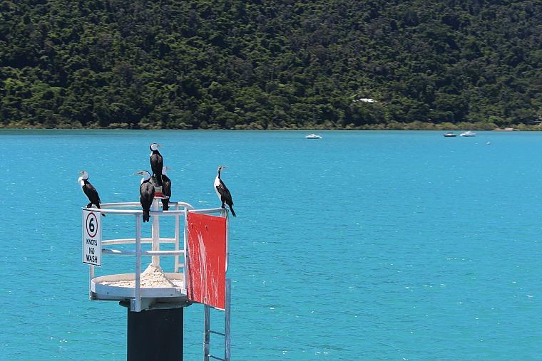 australia-whitsundays-birds