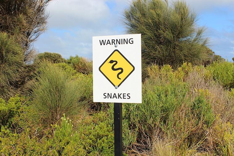 australia-great-ocean-road-snake-sign