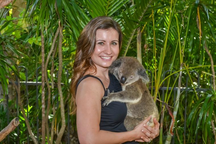 koala hamilton island