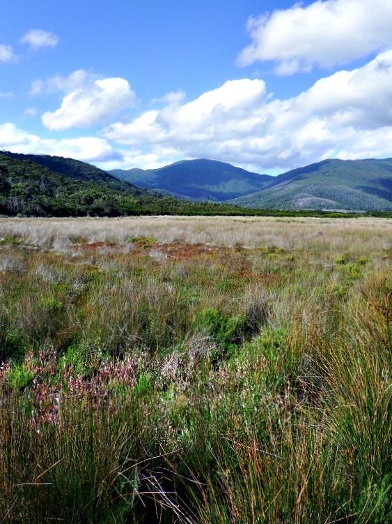 australia-wilsons-prom-reeds
