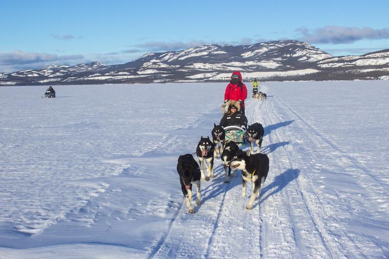 Canada-Yukon-Dog-Mushing-33