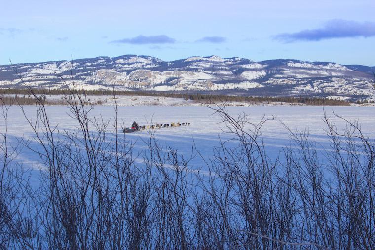 Canada-Yukon-Dog-Mushing-39