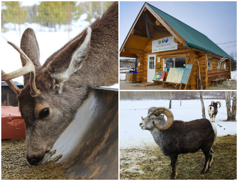 Day trips from Whitehorse, Yukon, Canada