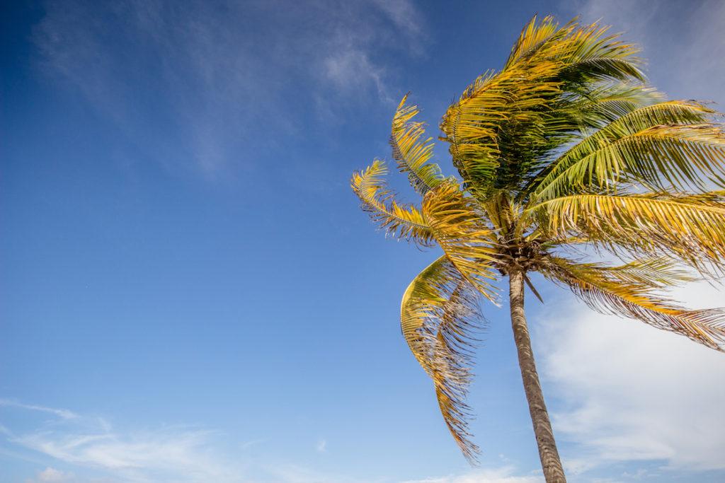 Mexico-Playa-del-Carmen-palm-tree