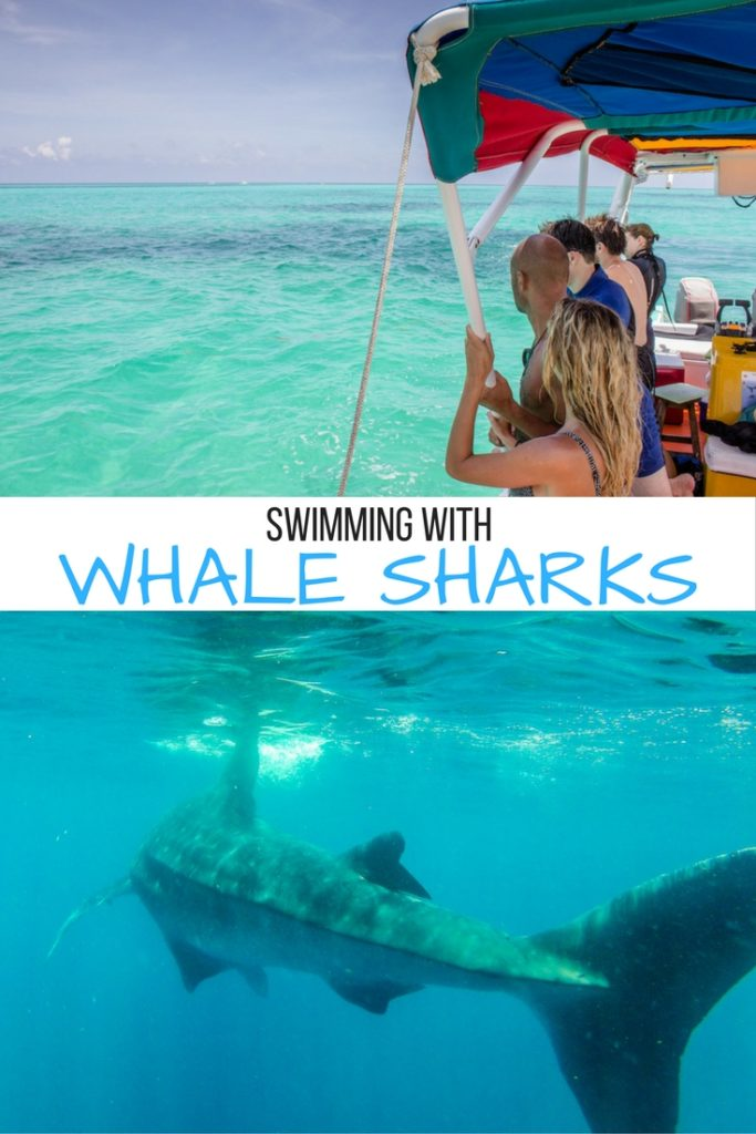 What it's like to swim with whale sharks in Mexico