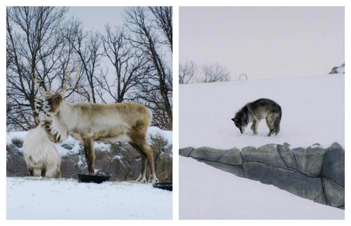 Assiniboine Zoo, Winnipeg, Manitoba